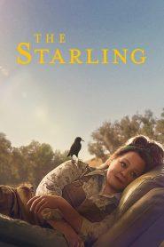 The Starling (2021) เดอะ สตาร์ลิง (ซับไทย)